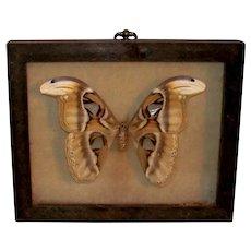 Vintage 1972 Atticus Atlas Silkworm Moth