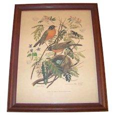 Vintage 1956-1957 Arthur Singer Original Offset Lithograph Bird Prints