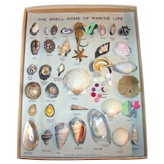 Vintage 1958 Seashell Collection NO. 1 By TBS