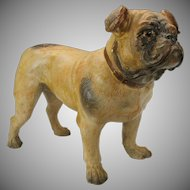 Near life size antique terracotta cold painted glass eyed Bulldog figure full standing