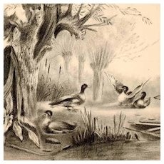 Lovely  Pencil Drawing Pond and Ducks