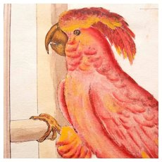 19th Century Hand Colored Copperplate Engraving Parrot Cockatoo