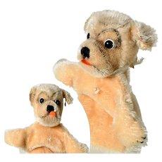 Adorable Steiff Dog Puppet Mopsi ca. 1950/70