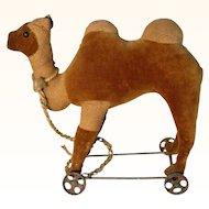Very Rare  Bactrian Camel ca. 1900 on Cast Iron Wheels
