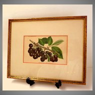 Antique French Botanical Print / Lithograph.  Bigarreau Napoleon III.  Cherries.  Exquisite ++.