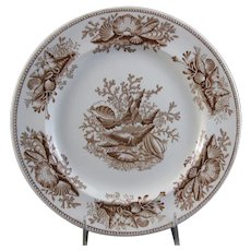 Victorian Staffordshire Brown Transferware Plate – Shell 1877