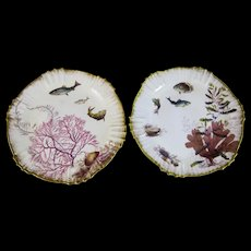Pair of Victorian George Jones Aquatic Polychrome Plates - Seaweed, Shells & Fish - 1880s