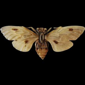 Art Nouveau Brooch Carved Horn Moth