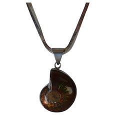 Fossilized Ammonite Pendant, with heavy chain