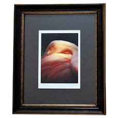 AMAZING Pink Flamingo Framed Photograph Signed Portrait