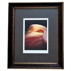 AMAZING Pink Flamingo Framed Photograph Signed Portrait