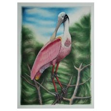 LARGE John Costin Roseate Spoonbill Bird Engraving Hand-Colored Signed & Numbered