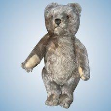 Vintage German mohair Steiff Bear