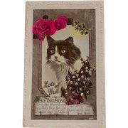 Real Photo Birthday Cat Postcard