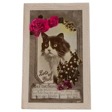 Real Photo Birthday Cat Postcard