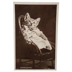 Cat Postcard Rotary Photograph, 1913