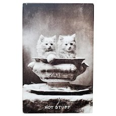 Cute Kitty Photo Postcard