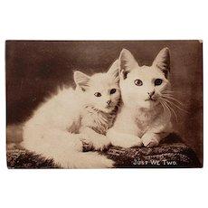 Cute Kitty Real Photo Postcard