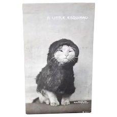 Rotograph Postcard, Eskimo Cat,1906
