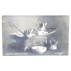 Rotograph Postcard with Kittens
