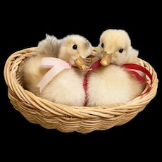 Vintage 1950's Easter Taxidermy Baby Ducklings with Glass Eyes