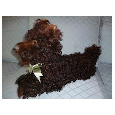 Charming old French brown curly coated Scottish terrier : Scottie pajama dog : doll companion