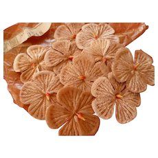 10 delicious French caramel velvet millinery flowers : unused : original packaging & label : circa 1900 : doll projects