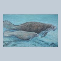 Large Oil Painting ~ Baby Manatee With Mother