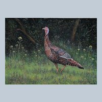 Large Oil Painting ~ Wild Turkey In Field Of Flowers