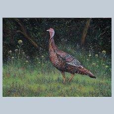 Large Oil Painting ~ Wild Turkey In Field Of Flowers