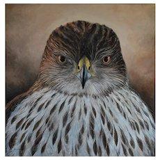 Large Oil Painting ~ Cooper Hawk Portrait