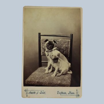 Antique Cabinet Photo ~ Adult Pug Dog With Pup