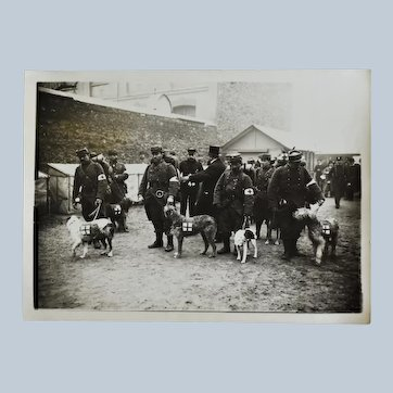 French WW1 Photograph ~ Red Cross Dogs
