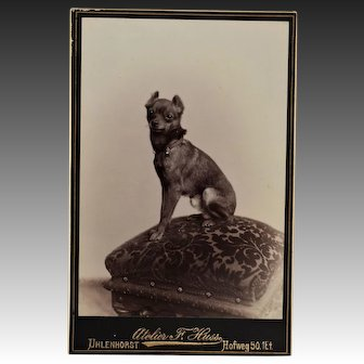 Antique Cabinet Photograph ~ Sweet Terrier Dog