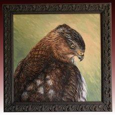 Oil Painting ~ Cooper Hawk Portrait