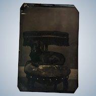 Antique Tintype Dog Photograph
