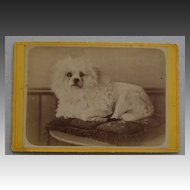 French Cabinet Photograph Recumbent Dog