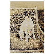 Antique RPPC Dog On Wicker Chair Postcard