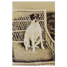 Antique RPPC Dog On Wicker Chair Postcard