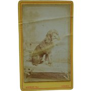 Antique CDV Photograph ~ French Poodle
