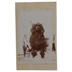 Antique French CDV Photograph ~ Black Poodle