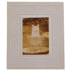 C1910 Antique French Cat Board Photograph
