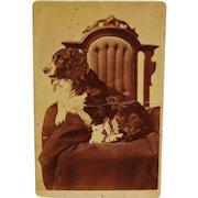 Antique Cabinet Photograph ~ Spaniel Dog