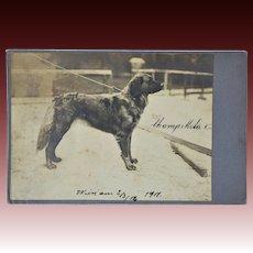 Antique Cabinet Photograph ~ Leonberger Dog