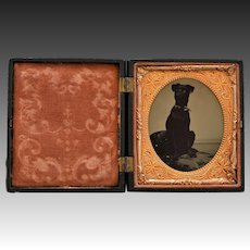 Antique 6th Plate Dog Tintype In Thermoplastic Case