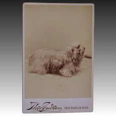 Antique Cabinet Photo ~ Cocker Spaniel Dog