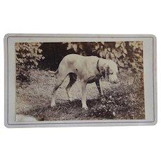 Antique French CDV Photo ~ Lovely Hound Dog
