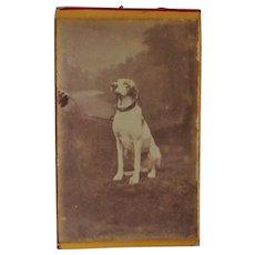 Antique French CDV Photo ~ Posing Hound Dog