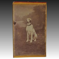 Antique French CDV Photo ~ Posing Hound Dog