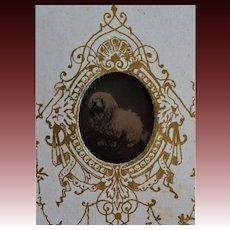Antique French Gem Tintype Photo ~ Dog Portrait